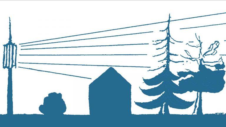Baumschäden