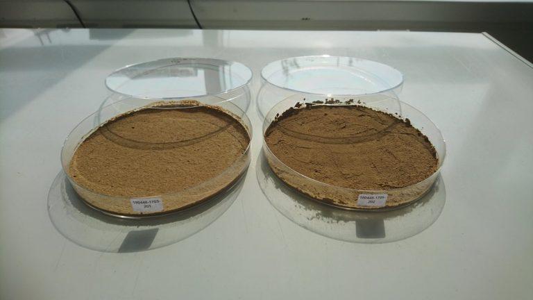 Mikrobielle-aspekte-lehmbau
