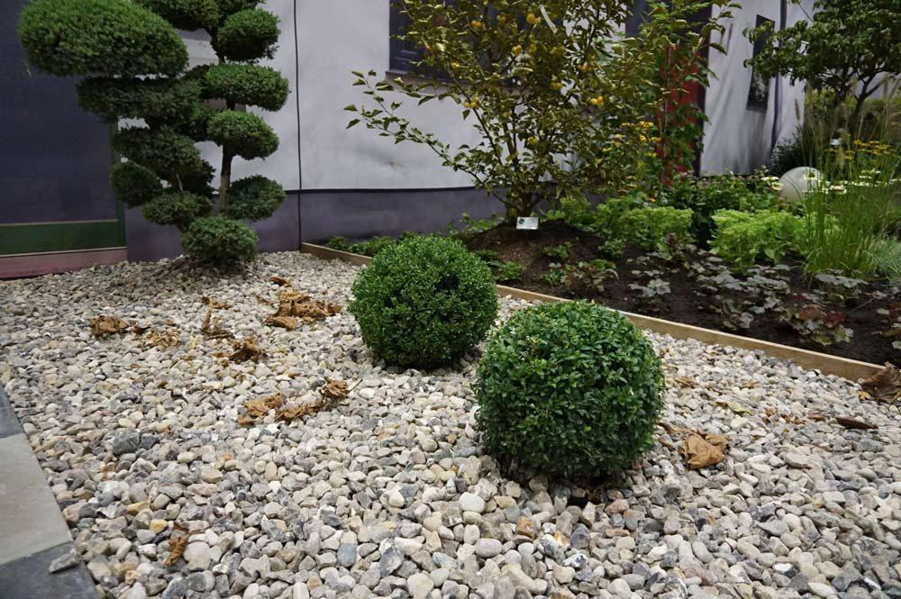Vorgarten mit Kiesbeet
