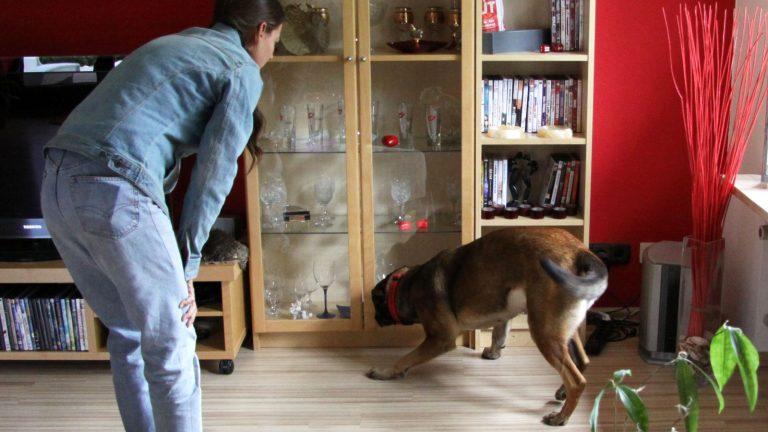 schimmel hund